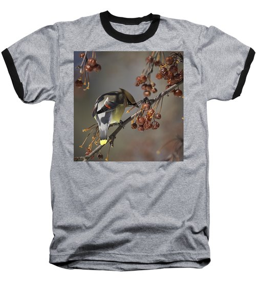 Cedar Waxwing Eating Berries 7 Baseball T-Shirt