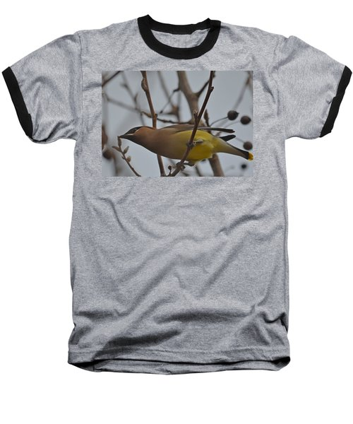 Cedar Waxwing Feasting In Foggy Cherry Tree Baseball T-Shirt by Jeff at JSJ Photography