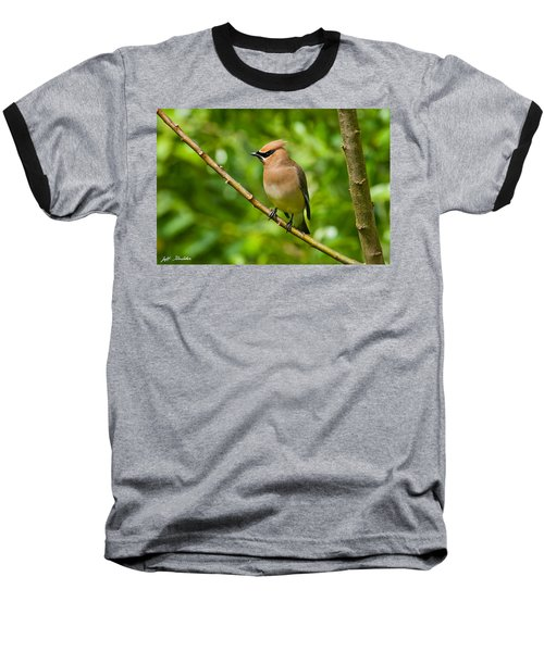 Cedar Waxwing Gathering Nesting Material Baseball T-Shirt by Jeff Goulden