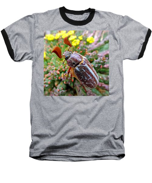 Chafer Beetle On Medusa Succulent 2 Baseball T-Shirt