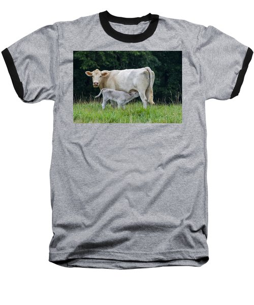 Charolais Cattle Nursing Young Baseball T-Shirt