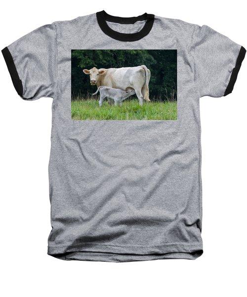 Charolais Cattle Nursing Young Baseball T-Shirt by Chris Flees