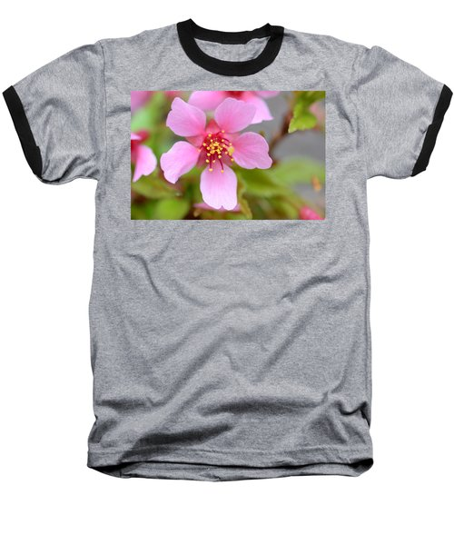 Cherry Blossom Baseball T-Shirt by Lisa Phillips