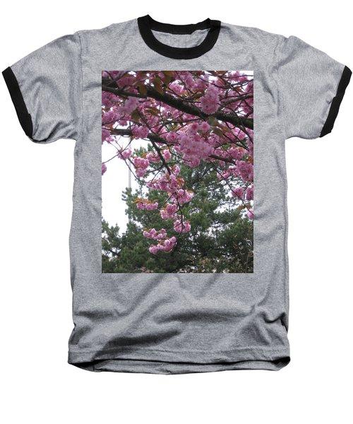 Cherry Blossoms 1 Baseball T-Shirt by David Trotter