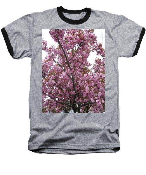 Cherry Blossoms 2 Baseball T-Shirt by David Trotter