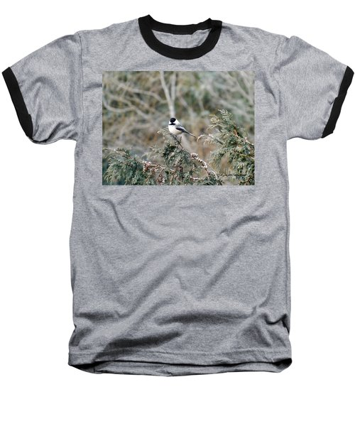 Baseball T-Shirt featuring the photograph Chickadee In Cedar by Brenda Brown