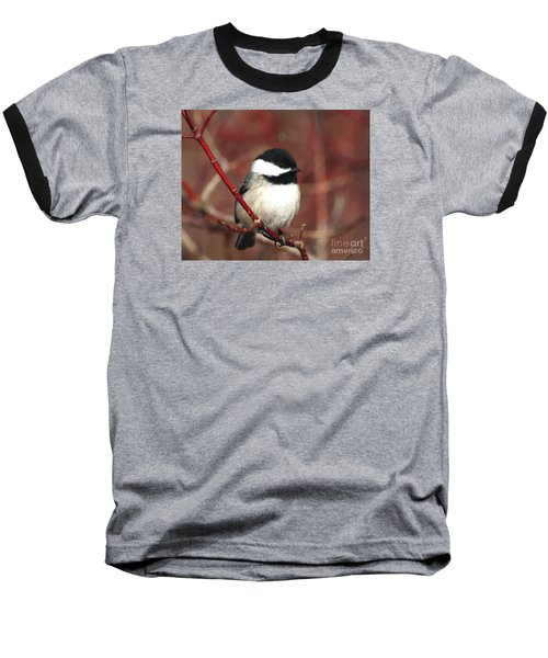 Chickadee Baseball T-Shirt by Susan  Dimitrakopoulos