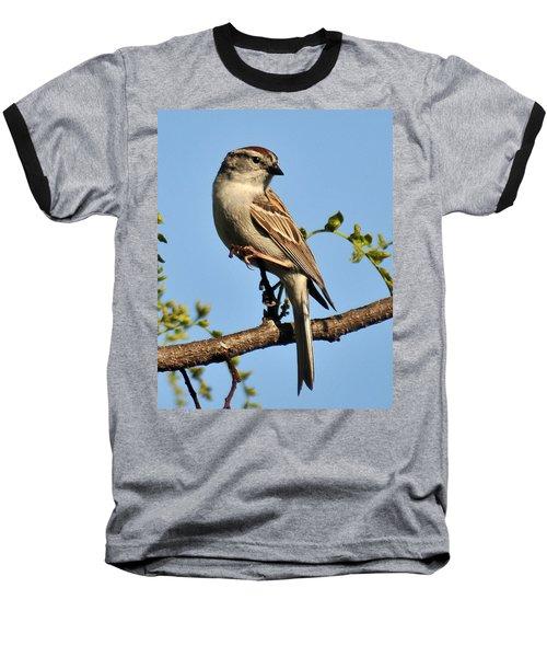 Chipping Sparrow 246 Baseball T-Shirt