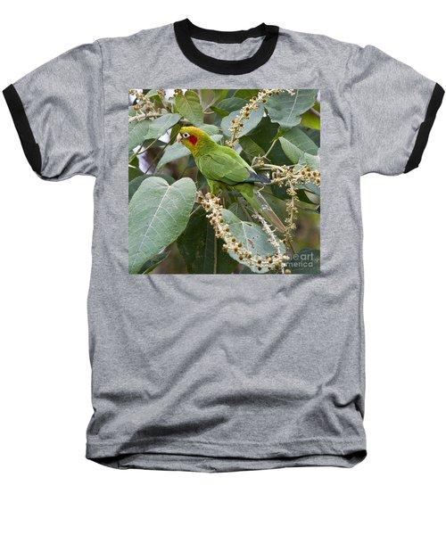 Chiriqui Conure 2 Baseball T-Shirt by Heiko Koehrer-Wagner