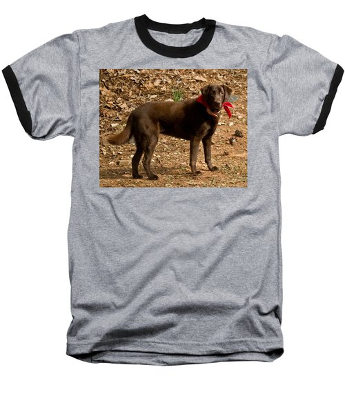Baseball T-Shirt featuring the photograph Chocolate Lab by Robert L Jackson