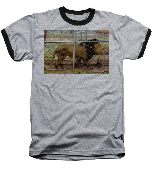 Christmas Lion Baseball T-Shirt
