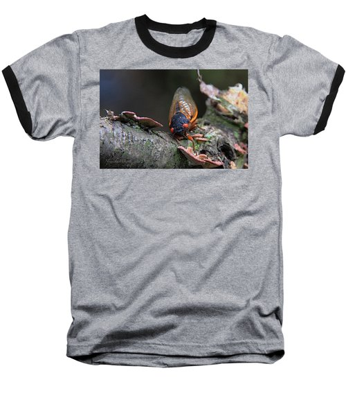 Cicada - The Red-eyed Monster Baseball T-Shirt by Yvonne Wright
