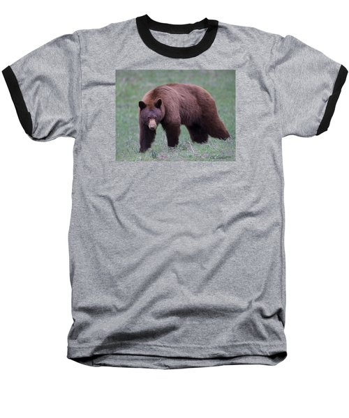 Cinnamon Black Bear Baseball T-Shirt
