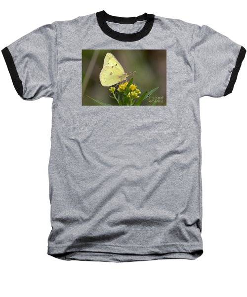 Clouded Sulphur Baseball T-Shirt by Randy Bodkins