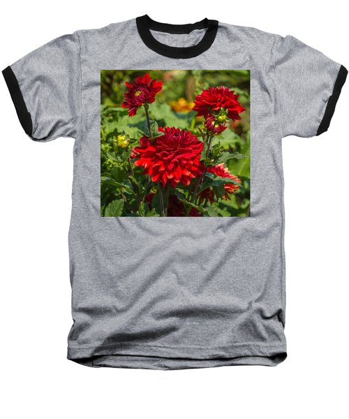 Cluster Of Dahlias Baseball T-Shirt by Jane Luxton