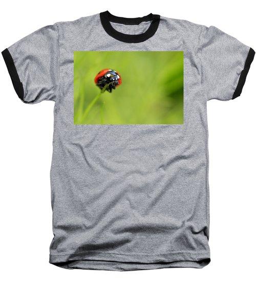 Coccinellidae  Baseball T-Shirt