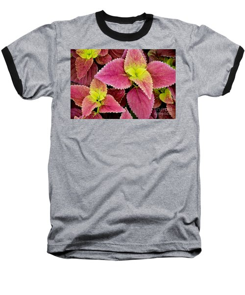 Coleus Colorfulius Baseball T-Shirt
