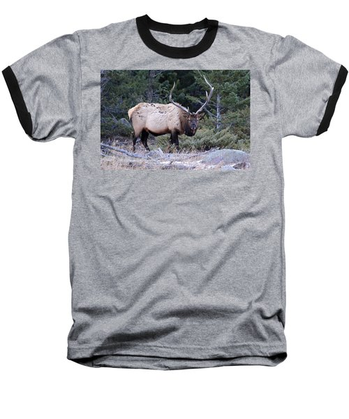Colorado Bull Elk Baseball T-Shirt