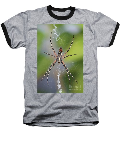 Colorful Spider Baseball T-Shirt by Kevin McCarthy
