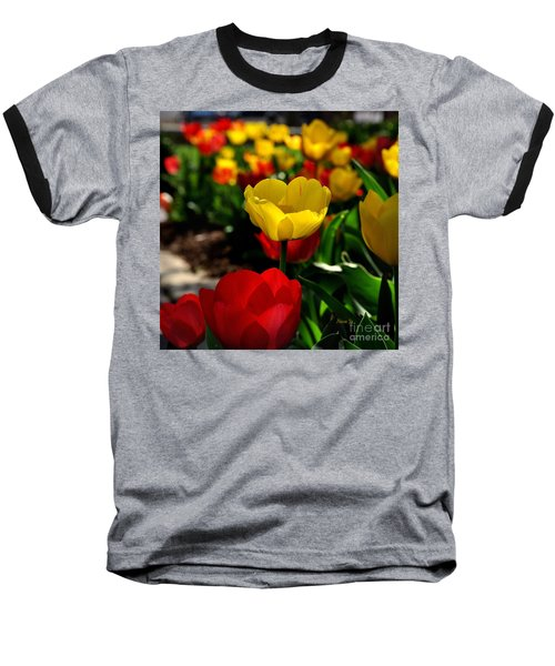 Colorful Spring Tulips Baseball T-Shirt by Nava Thompson