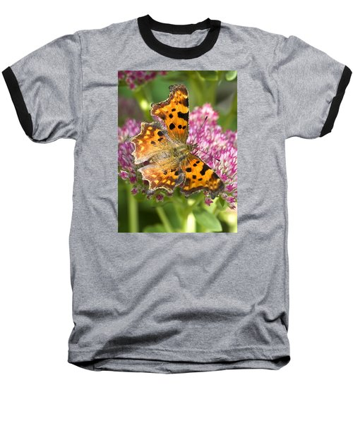 Comma Butterfly Baseball T-Shirt by Richard Thomas