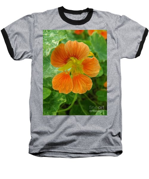Common Nasturtium Baseball T-Shirt by Sara  Raber