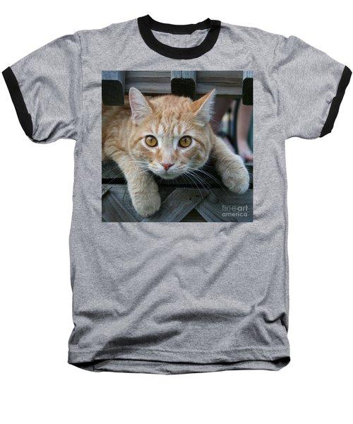Cool Cat Named Calvin Baseball T-Shirt