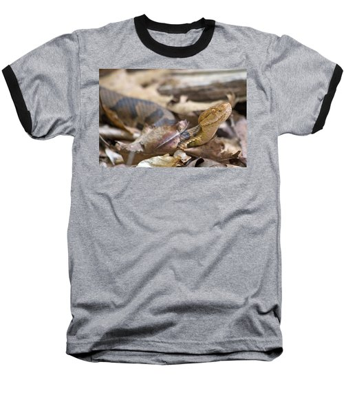 Copperhead In The Wild Baseball T-Shirt by Betsy Knapp