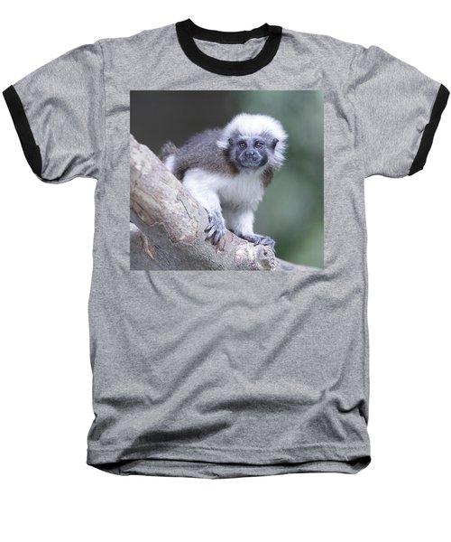 Cotton Top Tamarin  Baseball T-Shirt