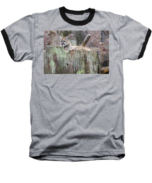 Cougar On A Stump Baseball T-Shirt by Chris Flees