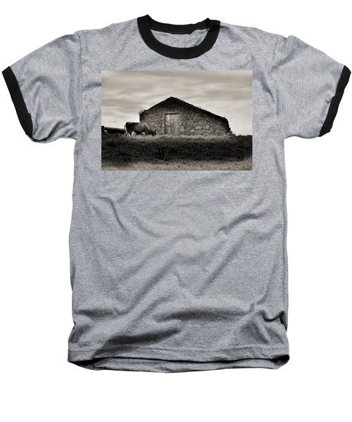 Cow Grazes At Rustic Barn  Baseball T-Shirt