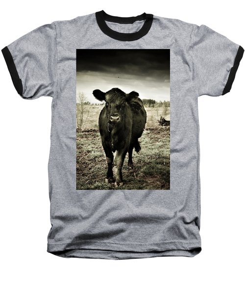 Cow In The Winter Pasture  Baseball T-Shirt