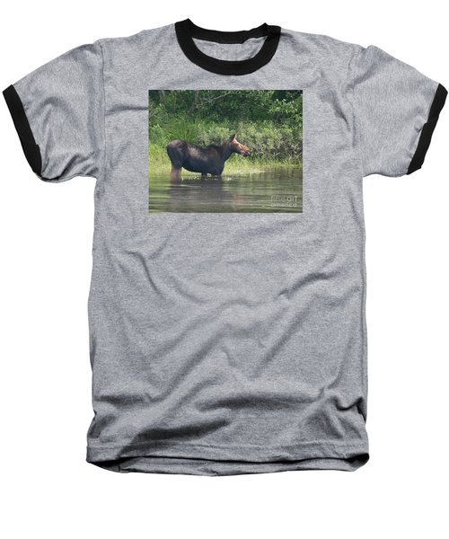 Cow Moose Breakfast Baseball T-Shirt by Neal Eslinger
