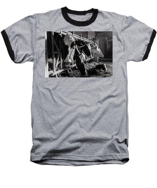Cows In The Barn2 Baseball T-Shirt