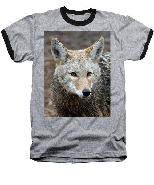 Baseball T-Shirt featuring the photograph Coyote by Athena Mckinzie