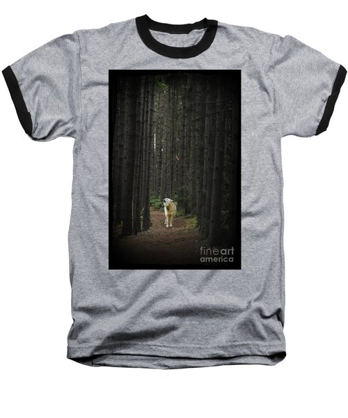 Coyote Howling In Woods Baseball T-Shirt by Dan Friend