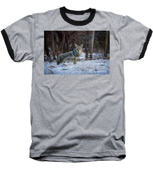 Coyote In The Meadow  Baseball T-Shirt