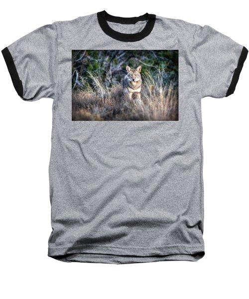 Coyote Stare Down Baseball T-Shirt