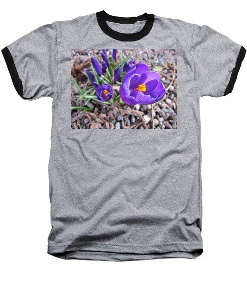 Crocus Sativus Baseball T-Shirt