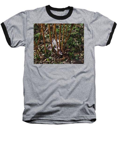 Crocuses And Raspberry Canes Baseball T-Shirt