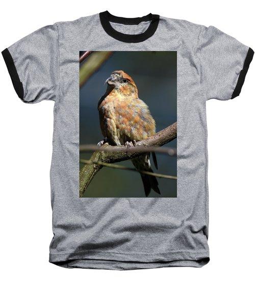 Crossbill Loxia Curvirostra Male Spain Baseball T-Shirt