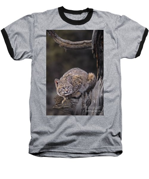 Baseball T-Shirt featuring the photograph Crouching Bobcat Montana Wildlife by Dave Welling