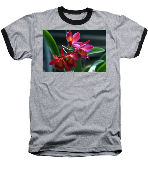 Ctna New River Orchid Baseball T-Shirt by Greg Allore