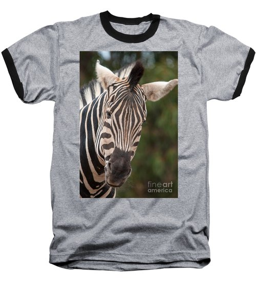 Curious Zebra Baseball T-Shirt