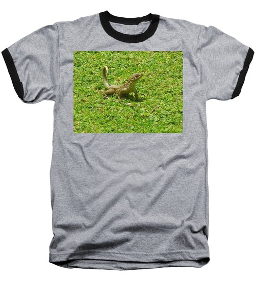 Curly-tailed Lizard Baseball T-Shirt by Ron Davidson