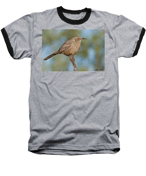 Curve-billed Thrasher Baseball T-Shirt by Jeff Goulden