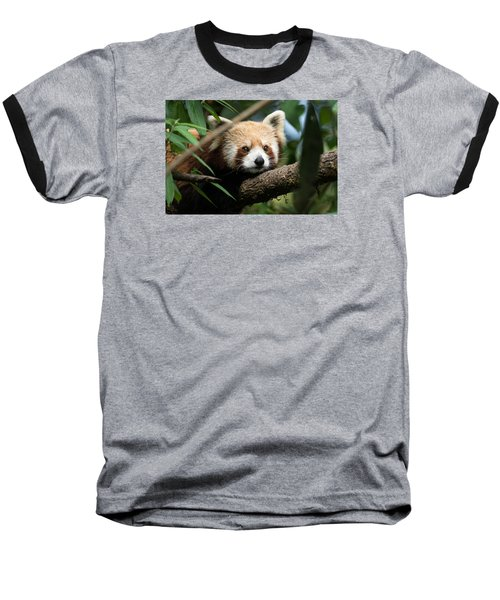 Cute Panda Baseball T-Shirt