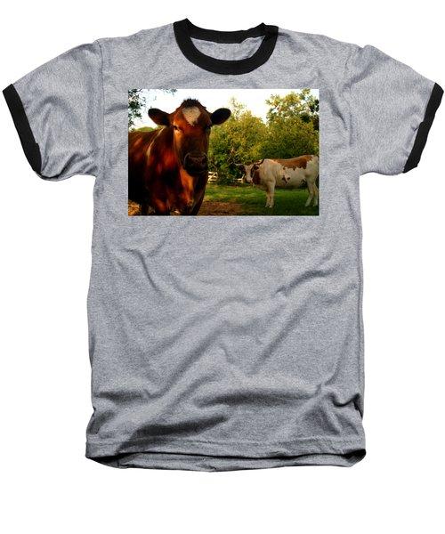 Dads Cows Baseball T-Shirt