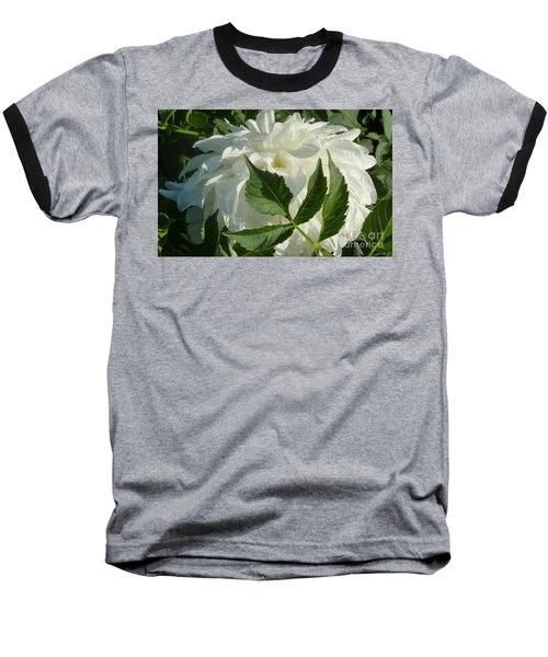 Dahlia Delicate Dancer Baseball T-Shirt by Susan Garren
