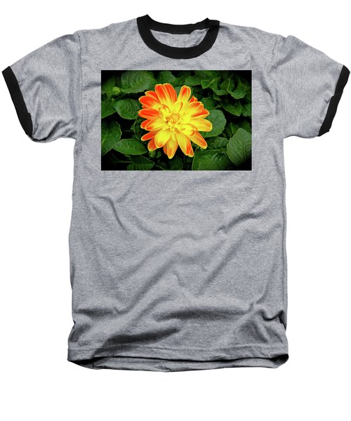 Dahlia Baseball T-Shirt by Ed  Riche